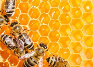 méz ; méh; Szülők Háza Magazin