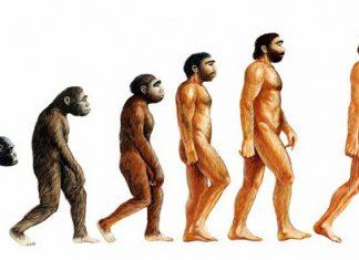 majom; ember; evolucíió; Szülők Háza Magazin