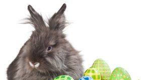 húsvéti nyuszi, szülők háza magazin