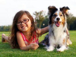 kutyatámadás, szülők háza magazin
